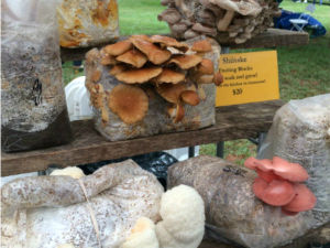 Mushroom Blocks